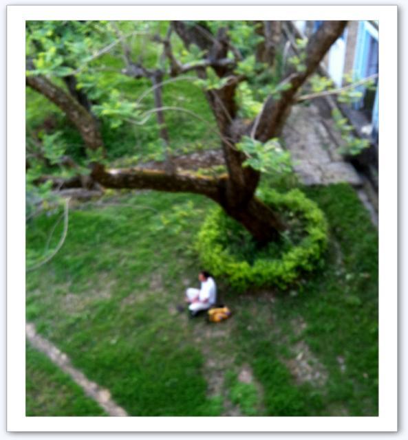 Un saint sous un arbre ?